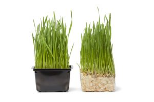 When to plant grass